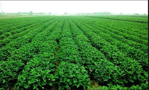 关注健康需求肥料产业新方向